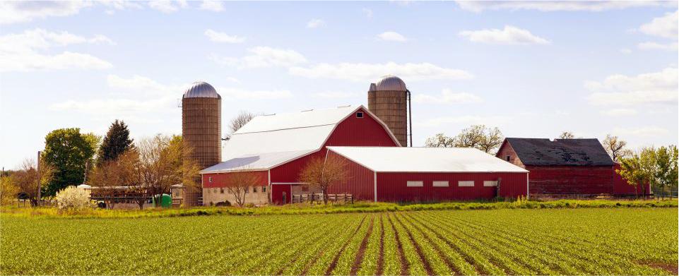 agricoltura-canciani-assicurazioni-bestiame-coltivazioni-foraggi